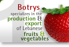 Botrys specializes in the production & export of Lebanese fruits & vegetables